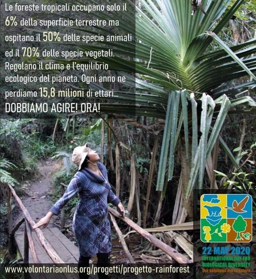 Progetto Rainforest