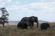 Parco del Serengeti
